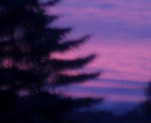 herbstviolett_o