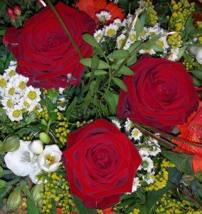 Rote Rosen_o