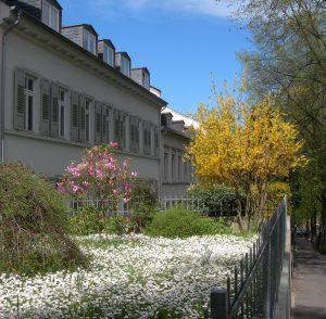 Gänseblümchen_o
