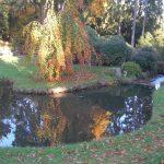 Herbstfarben_o
