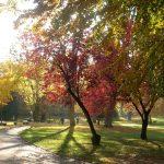 Kurpark im Herbst_o
